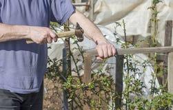 En man gör en ram för en ros, Bush som att bulta spikar arkivfoto