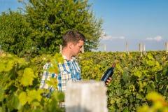 En man i en vingård royaltyfri foto