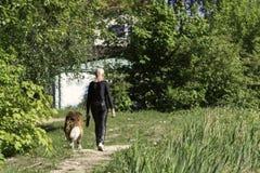 En man i svart ?tsittande kl?der som g?r en stor hund i, parkerar isolated rear view white royaltyfria foton
