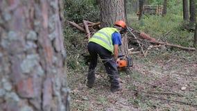 En man klipper ner ett träd i skogen som trädet faller på jordningen lager videofilmer