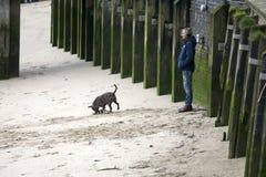 En man lyssnar till musik på hörlurar Hunden rusar längs den sandiga stranden på lågvatten Södra bank av Themsen Arkivfoto