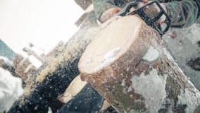En man med en chainsaw som sågar ett sörjaträd stock video