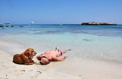 En man och en hund royaltyfri bild
