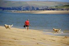 En man och hans hundkapplöpning Arkivfoton