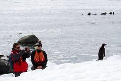 En man och en kvinna som håller ögonen på och tar ett fotografi av adeliae för en Adelie pingvinPygoscelis medan en grupp människ royaltyfria bilder