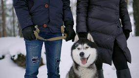 En man och en kvinna som sitter krama ett skrovligt för hundSiberian i vinterskogen som ler och ser de och på arkivfilmer