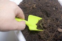 En man odlar jorden i en blomkruka Han gräver det med en skyffel Royaltyfri Foto