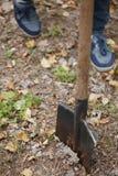 En man planterar ett träd, en ung man med pikar för en skyffel jordningen Natur-, miljö- och ekologibegrepp arkivfoto