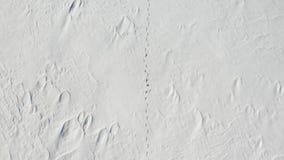 En man promenerar ett snöfält ensamhet ovanför sikt stock video