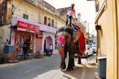 En man rider hans elefant i Jaipur, Indien fotografering för bildbyråer