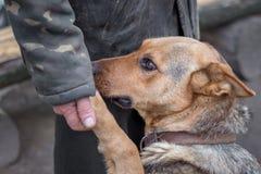 En man rymmer en hund som ` s tafsar i hans hand, förtroenden för en hund en person, en pe Arkivbild