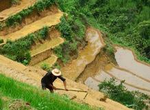 En man som arbetar på den terrasserade risfältet i Yen Bai, Vietnam Arkivfoto