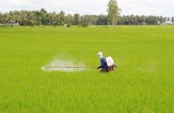 En man som arbetar på risfält i Tra Vinh, Vietnam Royaltyfria Foton