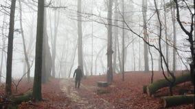 En man som går i en dimmig skog arkivfilmer