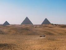 En man som rider en häst med Giza pyramider som bakgrunden Royaltyfri Foto