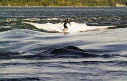 En man som wakeboarding på Stet Lawrence River i Montreal, Arkivbild