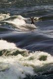 En man som wakeboarding på Stet Lawrence River i Montreal Royaltyfria Foton