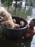 En man tar hans hundkapplöpning till säkerhet i en översvämmad gata av Pathum Thani, Thailand, i Oktober 2011 royaltyfria foton