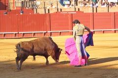 En man vs en tjur, Seville, Spanien fotografering för bildbyråer