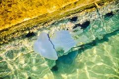 En manet i vattnet av Grekland Arkivfoto