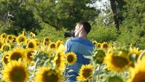 En manfotograf med en kamera skjuter en video i ett härligt fält av solrosor stock video