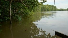 En mangrove Royaltyfri Fotografi