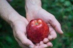 En manlig hand som rymmer ett rött moget äpple mot en bakgrund av grönt gräs arkivfoton