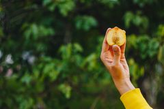 En mans hand rymmer en nytt vald mogen persikafrukt med ett ben klippta itu stycken mot en bakgrund av gräs och träd close royaltyfri bild