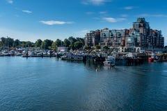 En marina på ingången till den Victoria hamnen, den Vancouver ön, Kanada och att moussera blått vatten och ljus blå himmel arkivfoto