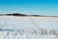 En mars sur des débuts de neige de champs dégelant Photographie stock libre de droits