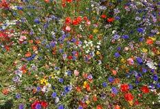 En mass av färgade blommor Royaltyfri Fotografi