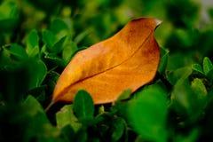 En matris leaf Arkivbilder