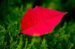 En matris Leaf Arkivfoto
