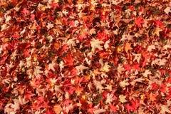 En matta av färgrika stupade sidor Royaltyfri Fotografi