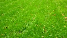 En matta av grönt gräs Redan är början av hösten, men gräset fortfarande saftiga stock video