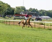 En medelålders jockey på ljusröd häst Arkivbilder