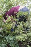 En medelålders kvinna som arbetar i trädgården arkivfoton