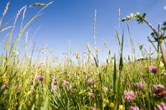 En medio de la hierba y de las flores Foto de archivo libre de regalías