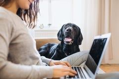 En midsection av den tonårs- flickan med en hund som inomhus som sitter på en soffa arbetar på en bärbar dator royaltyfri foto