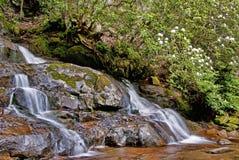 En milky vattenfall och en blomma rhododendron. arkivbilder