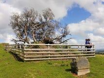 En minnesmärke till det ensamma trädet, Llanfyllin Royaltyfria Bilder