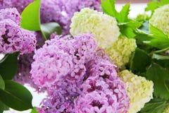 En mjuk bukett av lilan och buldenezh Fotografering för Bildbyråer