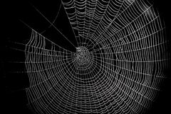 En modell för spindelrengöringsduk för halloween läskig spiderweb Arkivbilder