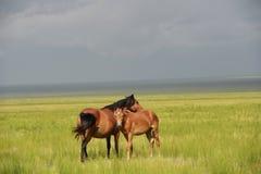 En moderhäst och ponny Arkivfoton