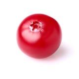 En mogen cranberry i closeup arkivbild