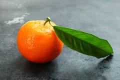 En mogen mandarine Arkivfoto