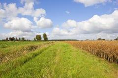 En mogen rapsfröskörd och sockerbeta i den sceniska lantbruklanddscapen av dalen av York Royaltyfri Bild