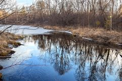En molnig höstafton i skogen på floden Det östliga Sibirienet Arkivbilder