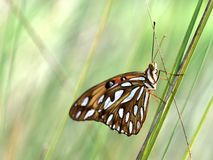 En monarkfjäril Arkivfoto