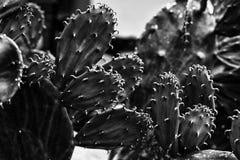 En monokrom abstrakt modell av mycket små grova spikar på kaktuns fotografering för bildbyråer